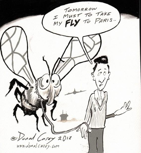 My Fly Blog
